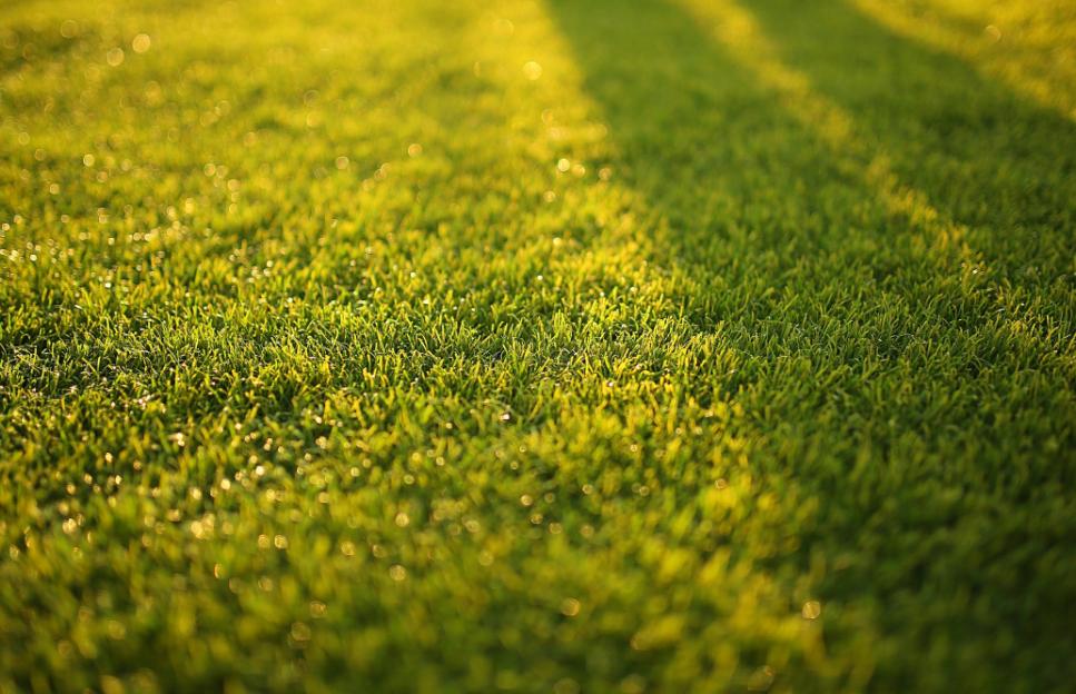 Der perfekte Rasen für ihren Garten
