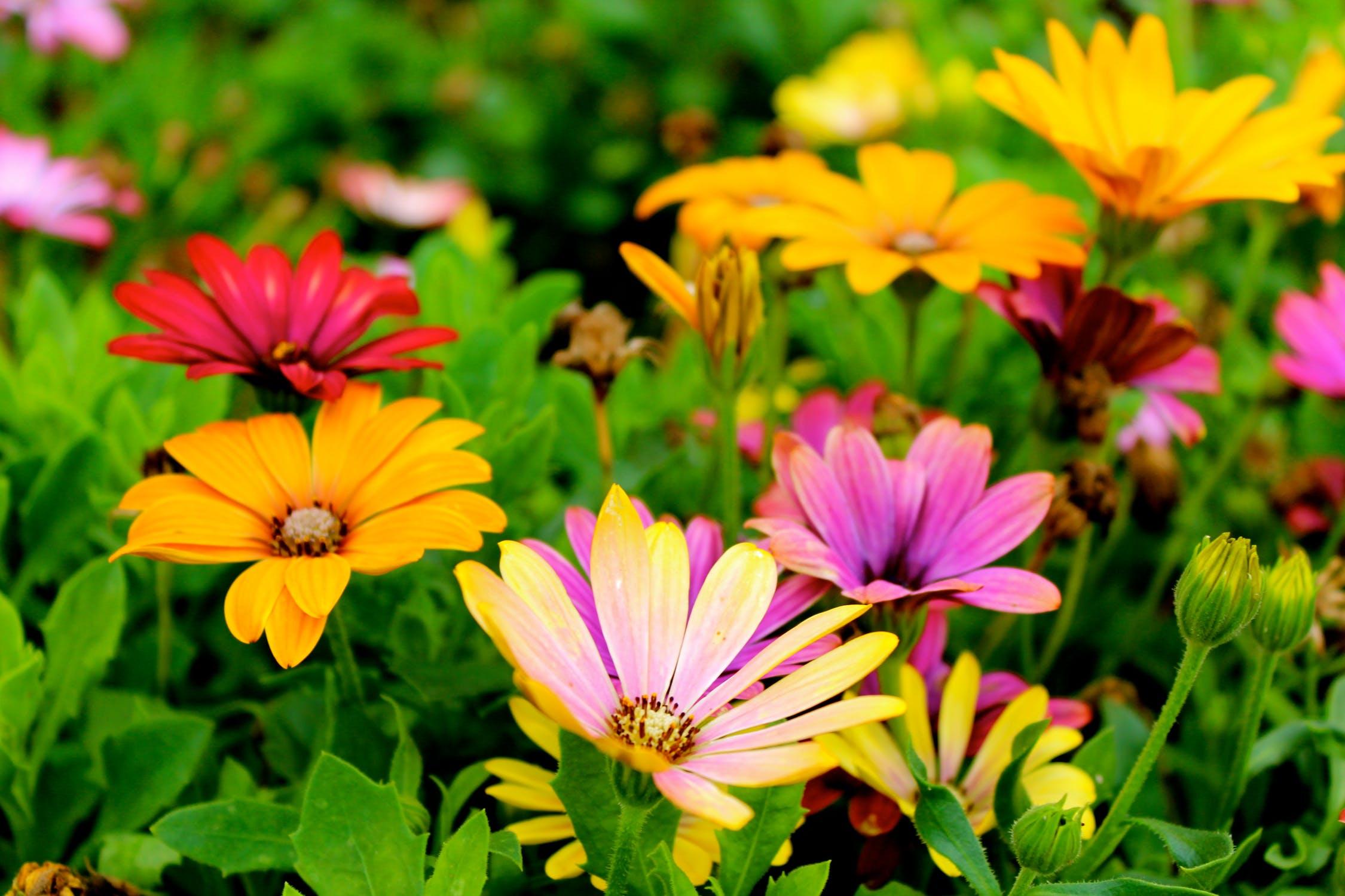Pimp your Garden – neue Ideen für dein grünes Glück