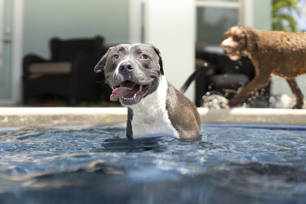 Hund im Garten Pool